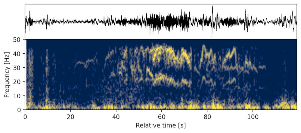 Elephant rumbles recorded on the seismometer & infrasound sensor
